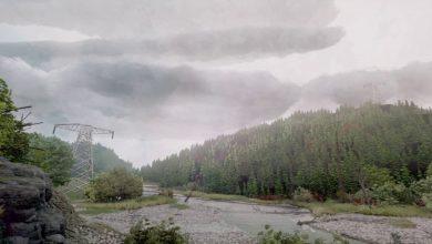 Photo of Este bosque loco-realista fue creado en sueños