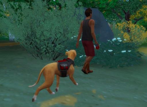 Mod Dogwalker