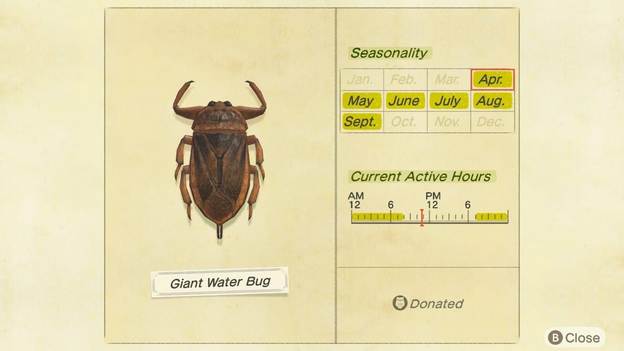 Insecto gigante de agua en un animal que cruza nuevos horizontes
