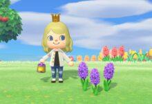 Photo of Animal Crossing New Horizons: Cómo conseguir jacintos morados