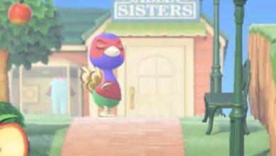 Photo of Animal Crossing New Horizons Phil: cómo llegar, cumpleaños, personalidad