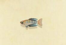 Photo of Animal Crossing New Horizons Rainbowfish: Cómo atrapar, vender el precio