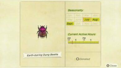 Photo of Animal Crossing New Horizons Dull Beetle: cómo atrapar, ubicación, precio de venta