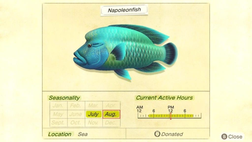 napoleonfish animal cruzando nuevos horizontes