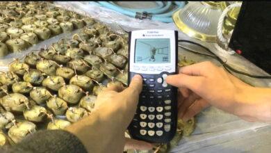 El jugador está jugando Doom en una calculadora de patatas, literalmente