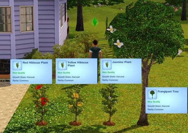 MTS_icemunmun-1556375-Plantas_ con flores
