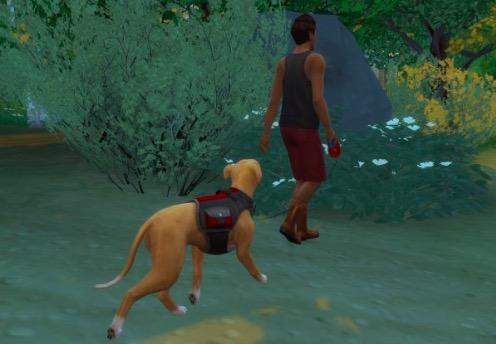 mod paseador de perros