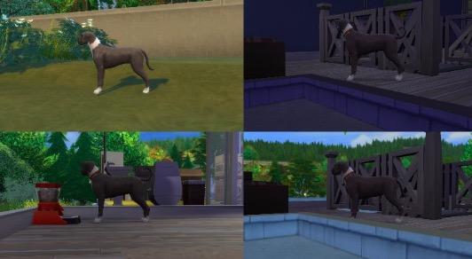 embarazo de perro